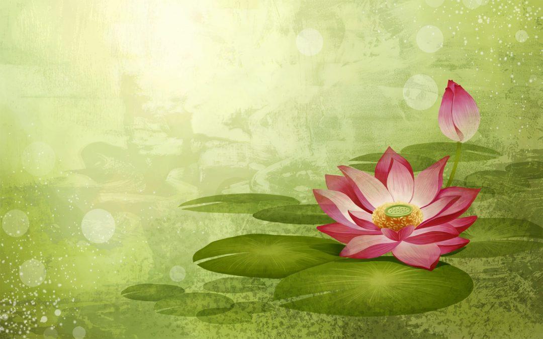 Be a Lotus!
